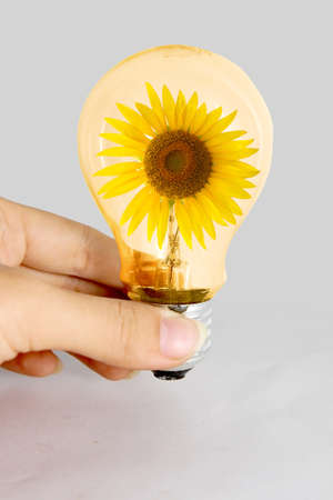 Hand hold light bulb with sunflower inside Stock Photo