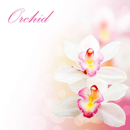 Pink orchid flowers background
