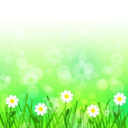 White flowers and green grass background Stock Photo - 13895571