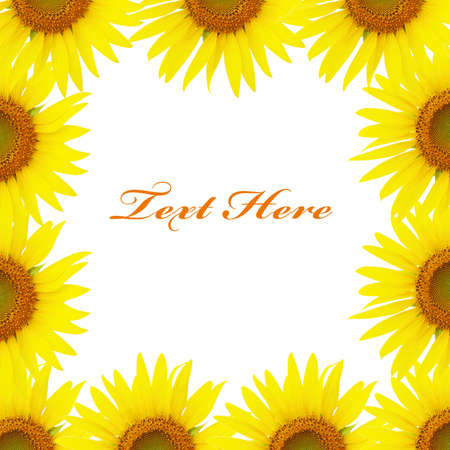 Yellow sunflowers background Stock Photo - 14033340