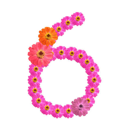 Flower number on isolate. Number six Stock Photo - 14328943