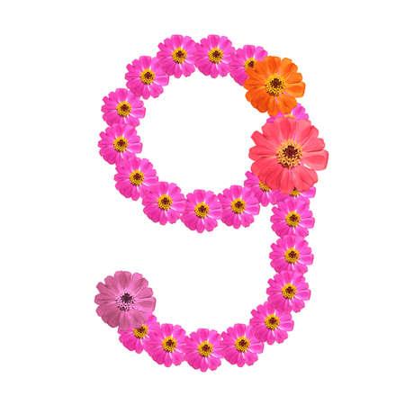 numerology: Flower number on isolate. Number nine Stock Photo