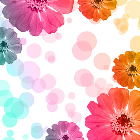 Colorful Zinnia flower background