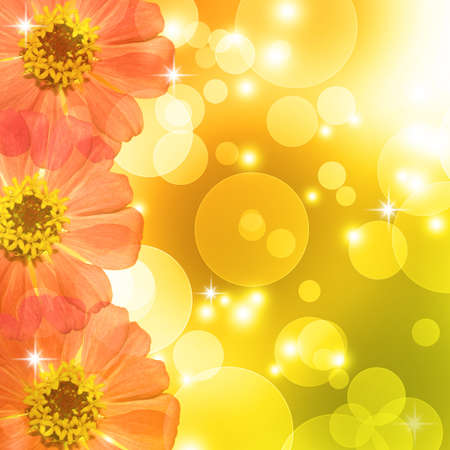 Orange Zinnia flower and bokeh background Stock Photo