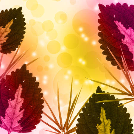 Colorful leaf and bokeh background