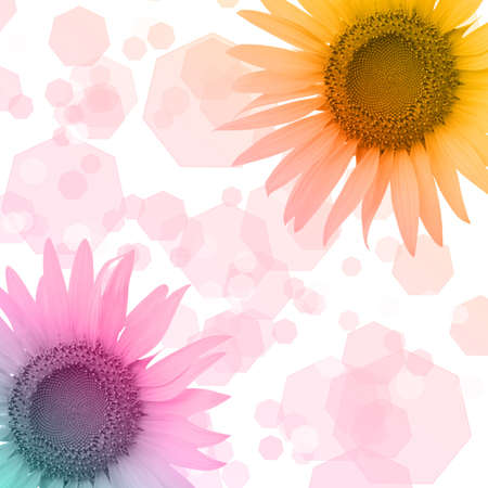 Colorful sunflower and bokeh background Stock Photo
