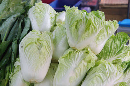 Fresh romaine lettuce in the market photo