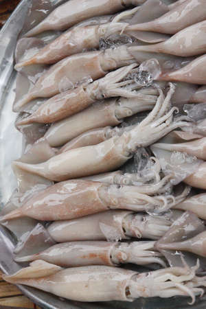 Fresh squid in the market