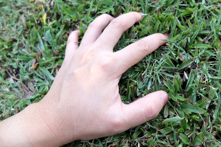 environmentalist: Hand touch the grass : Environmentalist concept Stock Photo