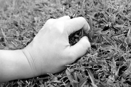 conservationist: Hand touch the grass : Environmentalist concept Stock Photo