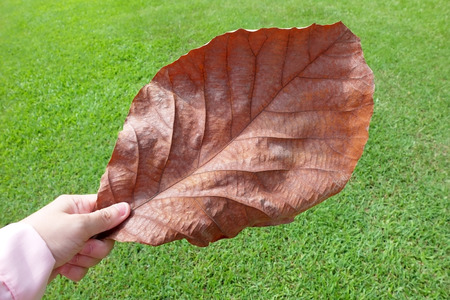 sward: Hand hold a leaf