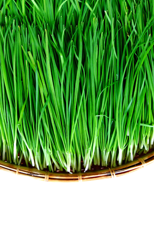 Garlic chives Stock Photo