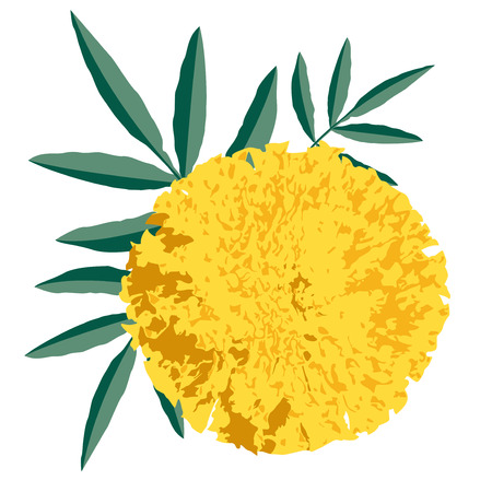cempasuchil: Gr�fico de una flor de la maravilla