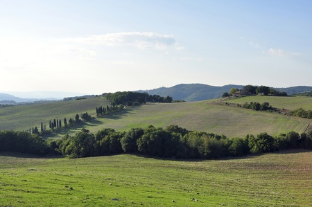 cedars: Tuscan countryside with fields, trees, cedars and hills