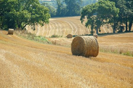 Fields after harvest in north of Brittany photo