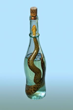 longevity drugs: It is an alcoholic drink containing a picked snake. The liquor is said to offer many benefits from skin improvement to longevity. The Kentucky people also drank their moonshine with a rattle snake in it. Stock Photo