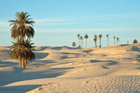 Douz  (South Tunisia) photo