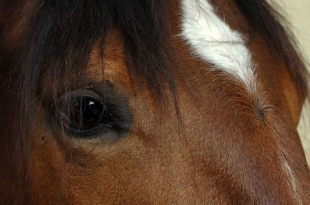 Close up of a horse head with a patch of white on the forehead.