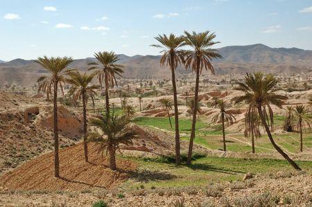 Troglodyte dwellings and oasis photo