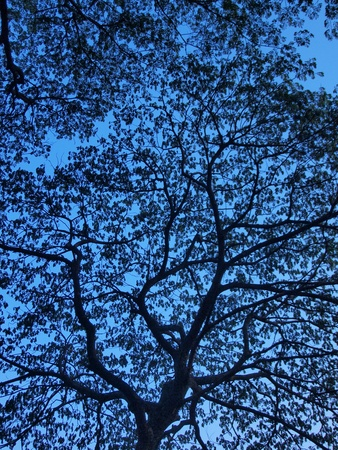 siloette: silhouette of tree in the morning