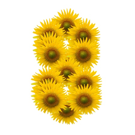 8, Sun flower alphabet isolated on white photo