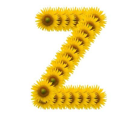 alphabet Z, sunflower isolated on white background photo