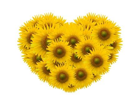 sunflower heart image isolate on white photo