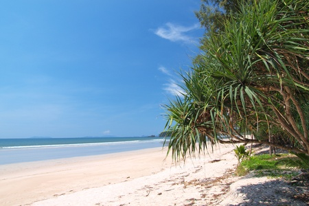 tropical white sand beach with palm trees in Thailand photo