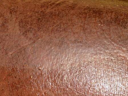 piel morena: Detalle de la h�meda piel morena Hipop�tamo