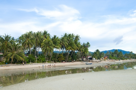Coconut tree on the beach in Thailand photo