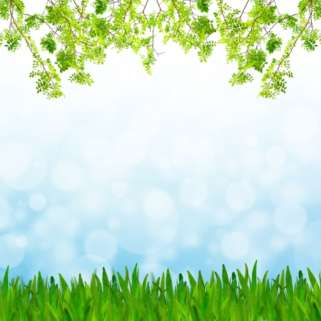 Abstract blue tone bokeh background with green grass and fresh green leaves photo