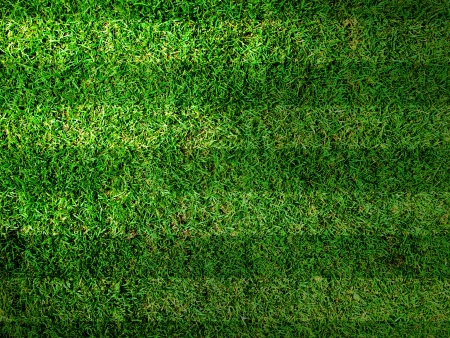Vivid Green grass background,Can use as background Stock Photo - 14310815