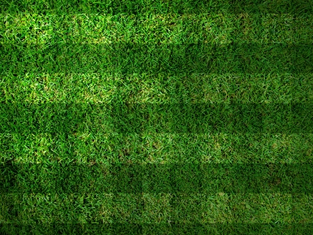 Vivid Green grass background,Can use as background photo