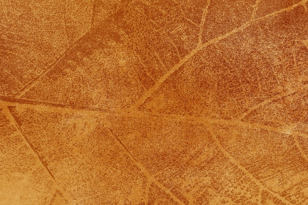 Dry leaf textured on grunge paper background Stock Photo - 14948531