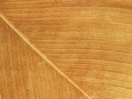 Palm leaf textured on grunge paper background Stock Photo - 15360596