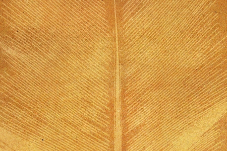 Palm leaf textured on grunge paper background photo