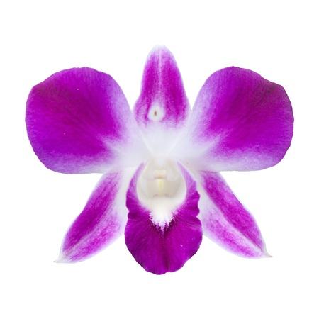 san valentin: rchid on the white background