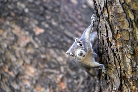 Cute squirrel sitting on the tree photo