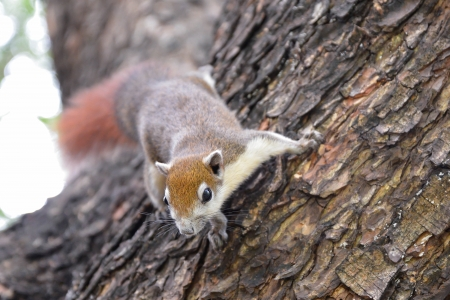Cute squirrel sitting on the tree Stock Photo - 16676566