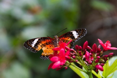beautiful butterfly sitting in the flower Stock Photo