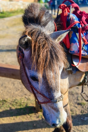 Head of a horse Stock Photo - 18289834