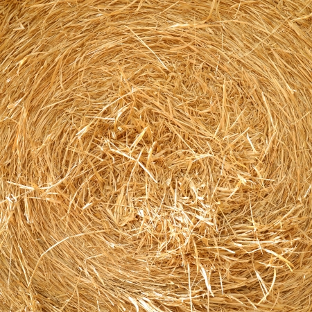 close up detailed view of stack of hay   photo