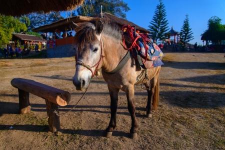 horseflesh: Horse at Thai-China Yunnan Village, Thailand Stock Photo