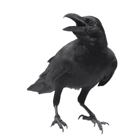 Raven bird high quality vector photo