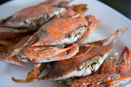 Close-up steamed blue crabs photo