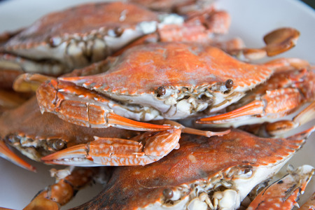 Close-up steamed blue crabs