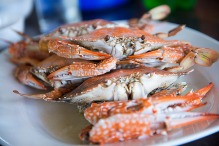 Close-up of steamed crabs photo
