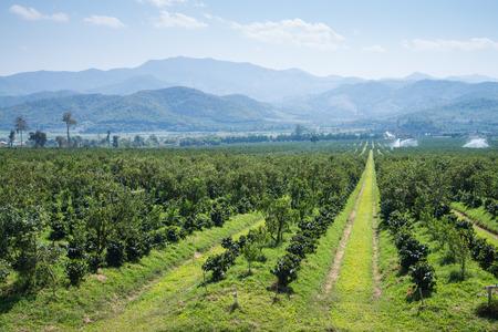 Thanatorn oranje boerderij vinden in Chiangmai, Thailand
