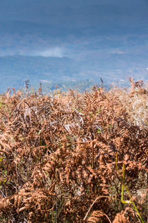 Alpine savanna grassland of Doi Inthanon, Chiang Mai, Thailand photo
