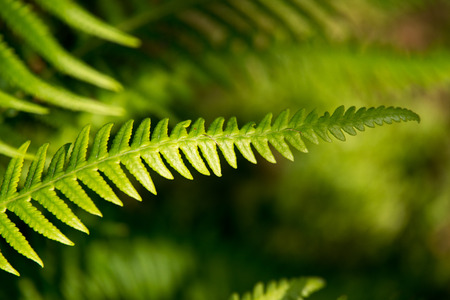 Close up of fern leaf photo